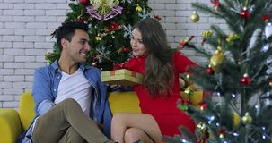 Caucasian couple sitting among Christmas trees. stock video footage