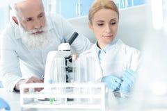 Caucasian forskare i enhetligt arbete med mikroskopet och flaskor i kemiskt laboratorium Royaltyfria Bilder