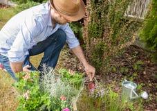 Caucasian gardener planting flower seedlings in the garden Royalty Free Stock Photos