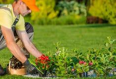 Planting New Flowers. Caucasian Gardener Planting New Flowers in the Backyard Garden stock image
