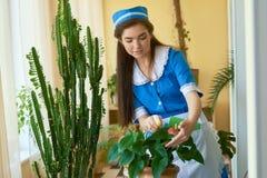 Caucasian housemaid at work. Stock Photo