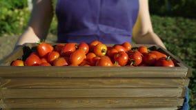 Caucasian kvinnlig för Closeup i förklädet och locket som bär träasken med tomater lager videofilmer