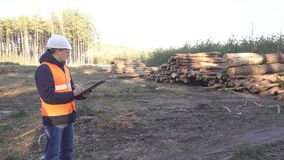 A caucasian male inspector checks deforestation and the quality of logs, fighting caroedal beetle stock video footage