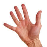Caucasian male right hand. Stock Image
