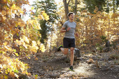 Caucasian man running on a forest trail, closer in Royalty Free Stock Images