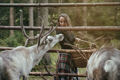 Caucasian pretty woman feeding reindeer in eco farm. Royalty Free Stock Photo