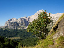 Caucasian reserve mountain Fisht. Sky rowanberry Stock Photos
