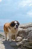 Caucasian Shepherd dog. On a montain rocks Royalty Free Stock Photos