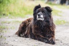 Caucasian Shepherd Dog. Outdoor in summer stock photos