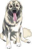 Caucasian Shepherd Dog. Sitting isolated on a white background Royalty Free Stock Photo