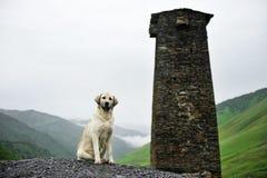 Caucasian shepherd dog. Caucasian Shepherd with a svan tower in Ushguli village, upper Svaneti region in Georgia stock image