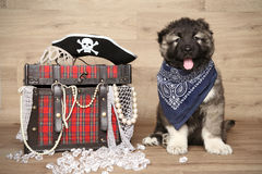 Caucasian shepherd puppy Royalty Free Stock Photos