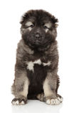 Caucasian shepherd puppy on white. Portrait of cute Caucasian shepherd puppy on white background stock images