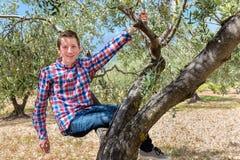 Caucasian teenage boy sitting in olive tree Royalty Free Stock Photos