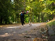 Caucasian women running around the autumn park with the dogs. stock images