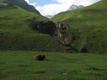 caucasus Royalty-vrije Stock Afbeeldingen
