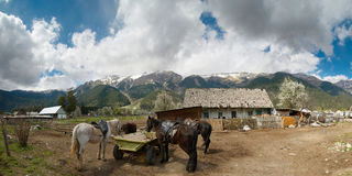 Caucasus. Arkhyz. Mountain village and the horses. Russia. Caucasus. Arkhyz resort. Mountain rural scenery. Horses and the cart. Panorama Stock Image