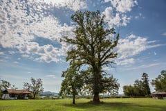 caucasus Den ljusa himlen och den högväxta eken Royaltyfria Foton