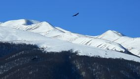 caucasus dzień dombay halny sofrudzhu pogodny obrazy stock