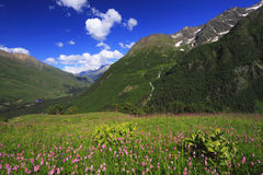 Caucasus Flowers. Landscape in Caucasus Mountains, Baksan Valley, Kabardino-Balkaria Republic Stock Images