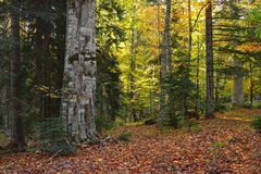 Caucasus forest Stock Photography