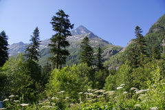 caucasus góra Fotografia Royalty Free