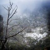 caucasus Georgia gudauri gór zima Fotografia Stock