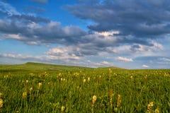 Caucasus green mountains Stock Photos