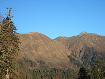 Caucasus mountains and coniferous forest, fir glade Stock Photo