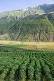 Caucasus mountains landscape Stock Images