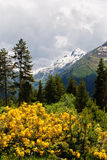 Caucasus mountains. View of Caucasus Mountains, Georgia Royalty Free Stock Photography