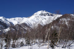 Caucasus Mountains. Winter forest Royalty Free Stock Image