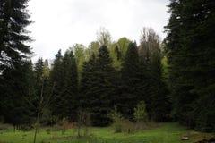 Caucasus reserve Royalty Free Stock Image