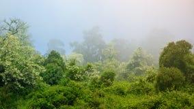caucasus Skog i dimma Arkivfoto