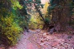 Cauce del río secado en el parque nacional de Zion Fotografía de archivo libre de regalías