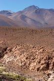 Cauce del río seco con los cactos, desierto de Atacama, Chile Fotografía de archivo