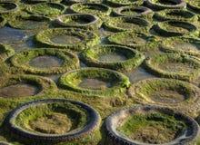 Caucho y algas Fotos de archivo libres de regalías