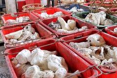 Cauchos de la cuajada en envases de plástico Foto de archivo libre de regalías