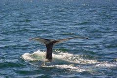 Cauda 4 da baleia imagens de stock
