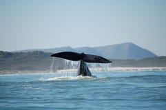 Cauda da baleia Imagem de Stock Royalty Free