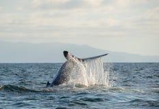 Cauda 2 da baleia fotos de stock royalty free