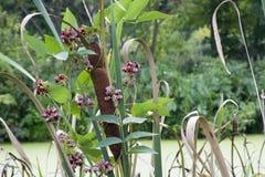 Cauda de gato cercada por flores roxas pequenas fotografia de stock royalty free