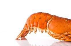 Cauda de lagosta fresca cozinhada Fotografia de Stock