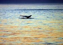 Cauda de soar a baleia Fotos de Stock Royalty Free