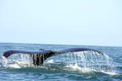 Cauda de uma baleia no oceano Fotos de Stock