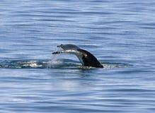 Cauda do humpback fotos de stock royalty free