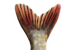caudal fena Royaltyfria Foton