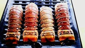 Caudas de lagosta foto de stock royalty free