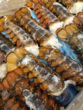 Caudas de lagosta fotografia de stock