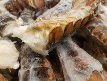 Caudas de lagosta congeladas fotos de stock royalty free